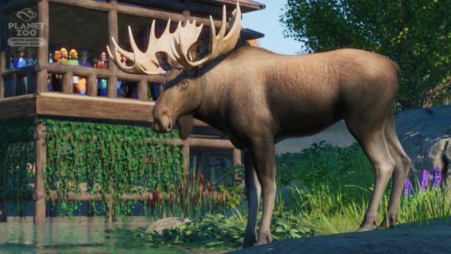 Planet Zoo: North America Animal Pack - Moose